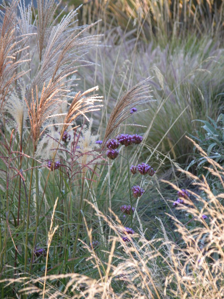 grasses moving in the wind